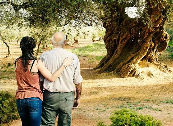 Olivo – Der Olivenbaum