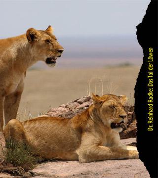 Das Tal der Löwen