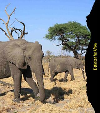 Elefanten für Afrika